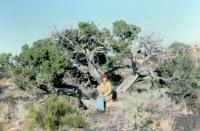 Oct. 1975. Barbara Jean (Lowing) Brink - Valley of Fires, New Mexico.